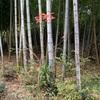 冬の日を透かし通して竹の里(あ)