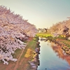 桜 ~ Sakura, A Gate to Your Sensational Memories ~