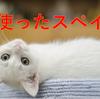 猫を使ったスペイン語 【Gato】