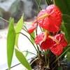 「大雨」上がって、植物観察会。