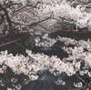 花粉症の方必見!春にオススメのインテリアコーディネート💡桜の写真やアートを飾って、お部屋でお花見気分🌸