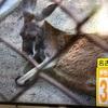 暑くて動物園の動物クタクタ〜