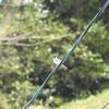 あまり聞き覚えのない声で小鳥が鳴いていた ニコンクールピクスP900で動画も撮ってみたよ