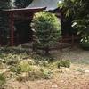 #谷中 #日本美術院 庭の手入れの日 #岡倉天心 #横山大観 #カルチェ・バル #モンパルナス
