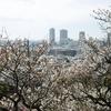 岡本梅林公園の梅