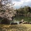 2019年京都桜の名所【二条城】【神泉苑】【東寺】【梅小路公園】