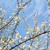 梅とか菜の花に春の到来を告げられます