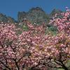 🌸妙義山県立森林公園さくらの里 4月下旬の撮影です😊