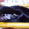 今日の黒猫モモ&白黒猫ナナの動画ー857
