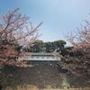 希少な皇居内の桜見。まるで品種博覧会のよう。