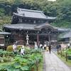 三室戸寺のハスとトンボ。