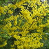 「まつこの庭」は春の花盛り !!