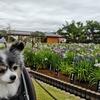 堀切菖蒲園、朝の散策
