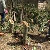 【千葉いすみ】竹林整備・竹炭づくりで里山再生!「いすみのいー炭」で自然との共生を実現