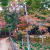 まるで京都!千葉で楽しめる最高の紅葉!