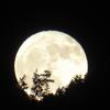 いつか見た月。
