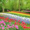【キューケンホフ公園(Keukenhof)】満開チューリップの幻想空間。雨天のち晴れ。