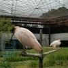 トキにも会える!いしかわ動物園に行ってきました。