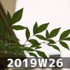 週報 2019W26