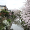 滋賀へ、お礼参りと、花見と、スマホでぷちトリップ
