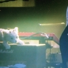 スピッツ「醒めない」DVDレビュー 3曲目:日曜日
