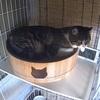 調子に乗ってイタズラをして、自分の寝床を狭くする猫
