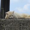屋久島の猫たち