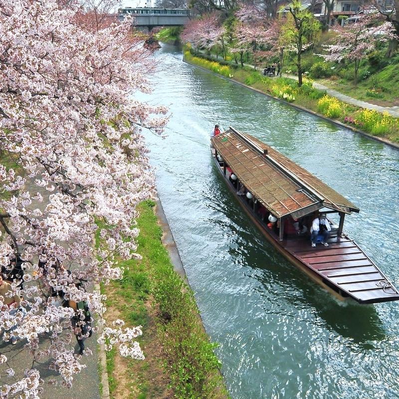 船上から見る優雅な桜観賞 京都のお花見クルーズ船【6選】