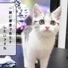 猫の病気 ~セカンドオピニオン~