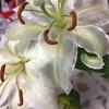 透明な百合の花弁