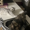 猫同士でも苦手な関係はあるようです💦