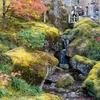 【一眼レフ】箱根に紅葉やその他諸々を見に行ってきた