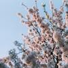 4月19日の霞城公園