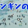 本日のおススメアプリ【ペンギンの島】