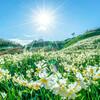 本日春分、西洋占星術では新しい1年の始まりです。