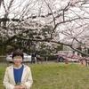 週末の観桜記