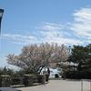 桜とツツジと青空、一ヶ月ぶりの摩耶山です。