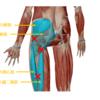 膝が痛いのは膝の問題か?