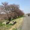 長良川の桜並木を求めて・・・