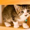 猫を室内飼いしたくて、準備モード突入