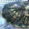 昨日(1/31)の事。月、トウブドロガメ子亀、おまけのヒメニ。