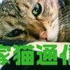 家猫通信(Enty)