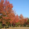 秋の於大公園2