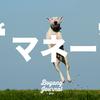 『マネーという名の犬』 子どもだけでなく大人にもおすすめの1冊