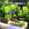 セボシタビラ繁殖法⑤二枚貝に無事産卵!稚魚を浮出させる準備をしよう!