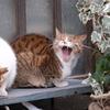 2月5日 江戸川区平井から荒川土手まで猫さま歩き とその情景