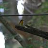 夏の探鳥、山梨・神奈川の野鳥。