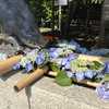 護王神社の夏越大祓「いのちの和」 -茅の輪くぐりと花手水-