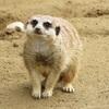 かわいい千葉市動物公園の動物たち