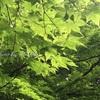 【緑】新緑の京都 七宝の美しさに感動(並河靖之七宝記念館)
